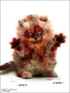 20101118233258-gato-zombie-cat-227x300.jpg